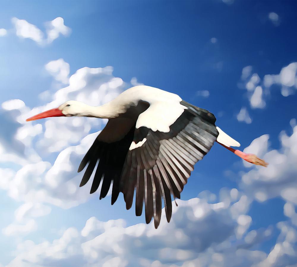 storch-flug